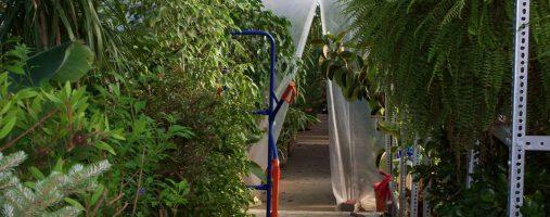 Dísznövények gondozása és teleltetése